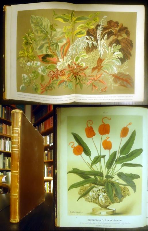 Illustrirte Berichte über Gartenbau. Blumen- und Gemüsezucht, Obstbau und Forstkunde.