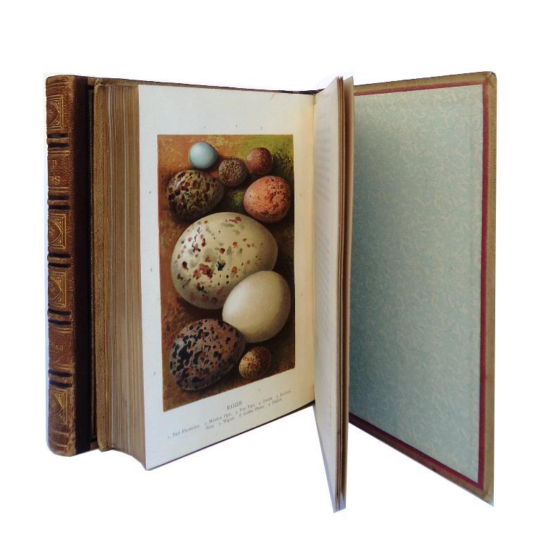 Familiar Wild Birds. 2 volumes (of 4).